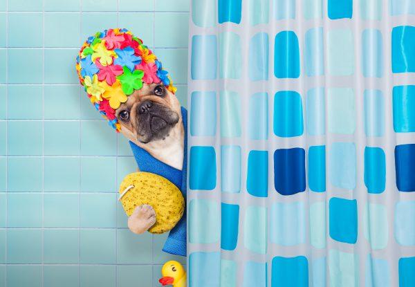 dog in shower